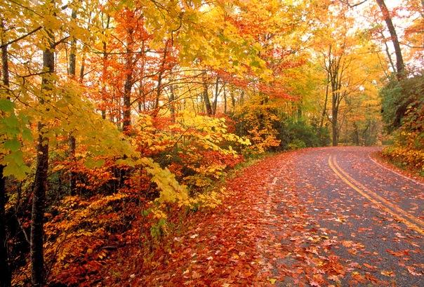 Куда ехать за золотой осенью